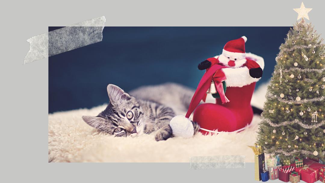 Bezpieczeństwo zwierząt w czasie świąt