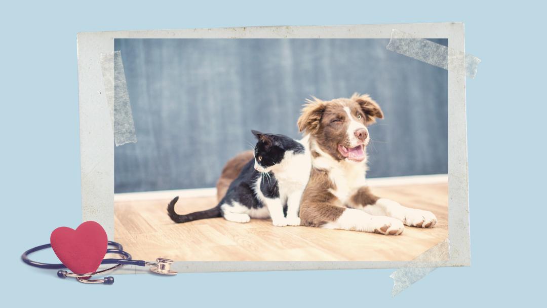 Pies i kot w roli terapeuty