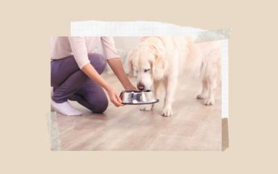 Skutki złej diety psa