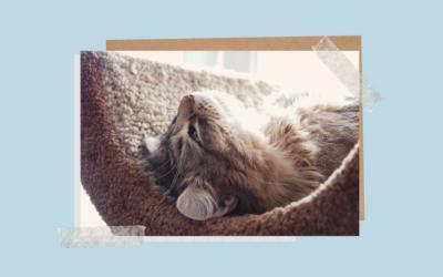 Feromonoterapia czyli sposób na kocie stresy