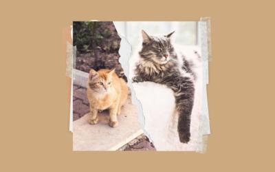 Kot domowy czy wychodzący