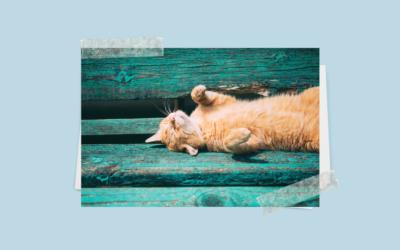 Koty podczas upałów