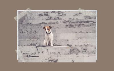 Co robić gdy zgubisz lub znajdziesz psa albo kota