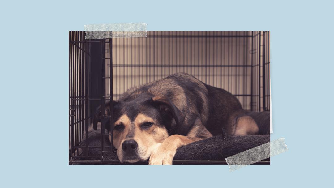 Klatka kennelowa – azyl czy więzienie