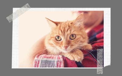 Kot najlepszym przyjacielem człowieka?