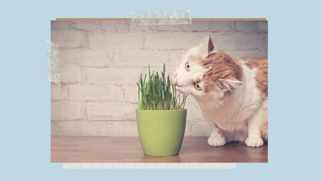 Rośliny doniczkowe szkodliwe dla kota